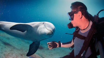 selfie with dolphin underwater coming to diver