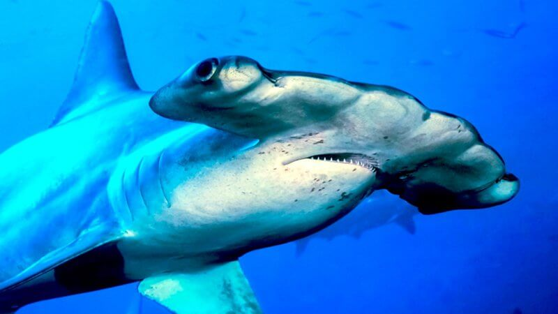 Look out for sharks as you drift on by