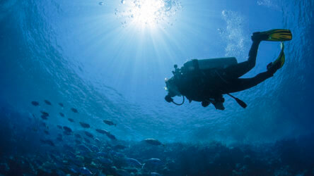 Diver swims with sun at his back
